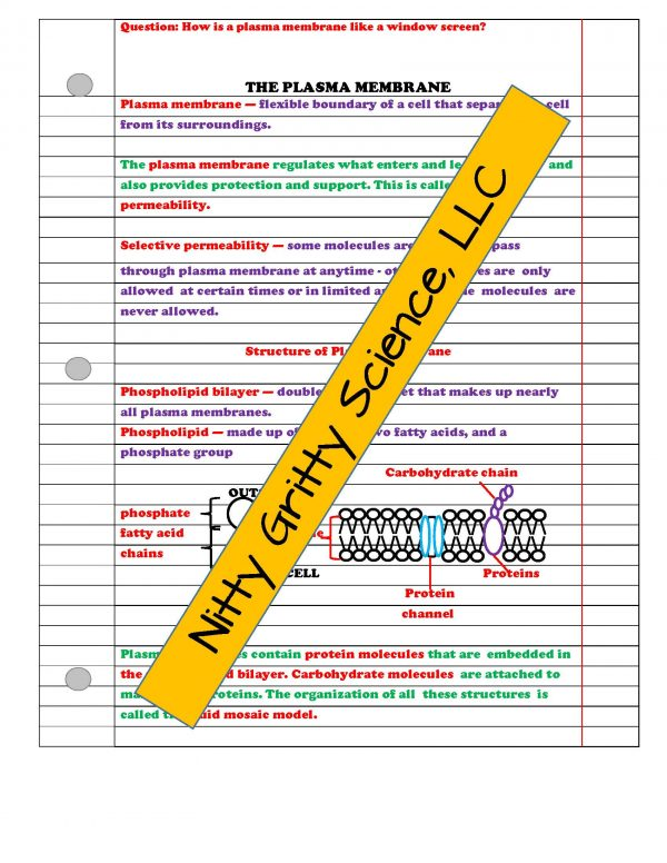 2346947 Page 3 600x776 - Cell Structure and Function: Life Science Notes, PowerPoint and Test ~ EDITABLE!