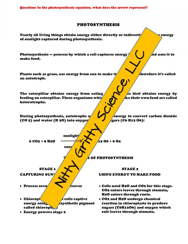 2348848 Page 4 600x776 - Cell Processes and Energy Life Science Notes, PowerPoint & Test~ EDITABLE