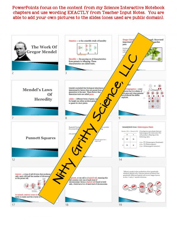 2350521 Page 5 600x776 - Genetics - Study of Heredity: Life Science Notes, PowerPoint and Test ~ EDITABLE