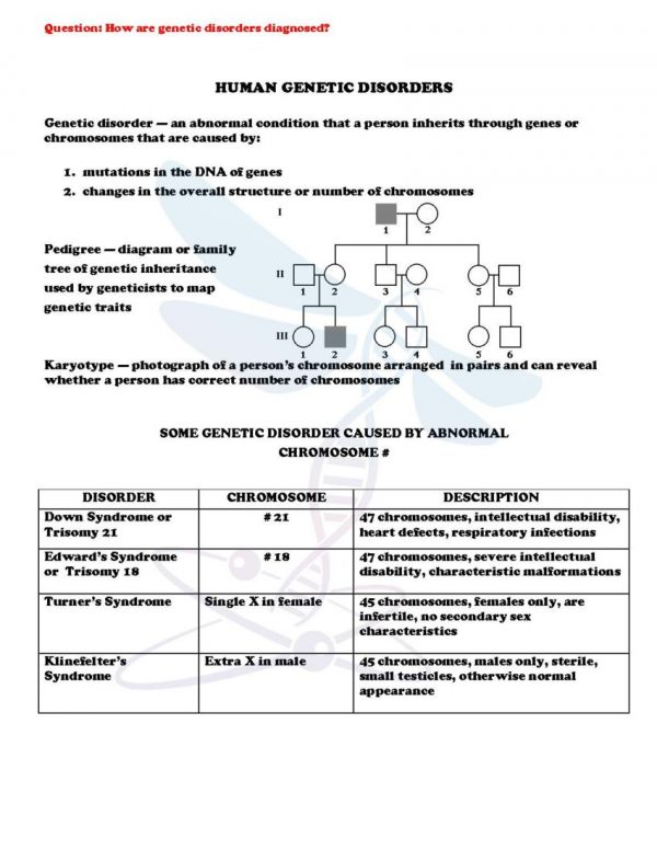 2354801 Page 4 600x776 - Modern Genetics: Life Science Notes, PowerPoint and Test ~ EDITABLE