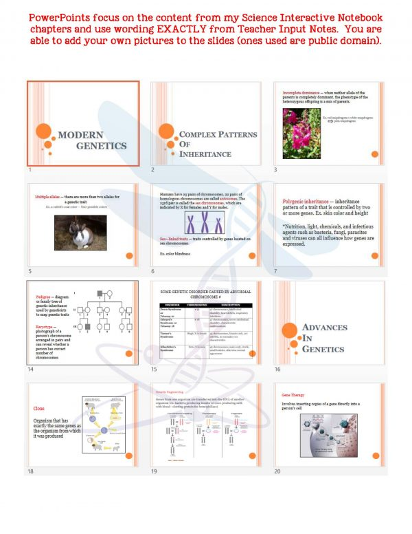 2354801 Page 5 600x776 - Modern Genetics: Life Science Notes, PowerPoint and Test ~ EDITABLE