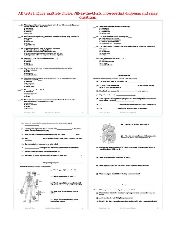 2399151 Page 6 600x776 - Human Body - Part 1: Life Science Notes, PowerPoint & Test ~ EDITABLE