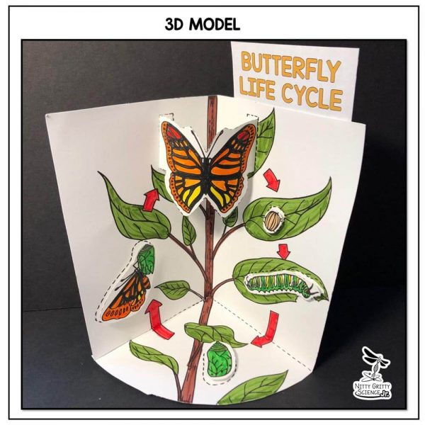 Butterfly Life Cycle Preview 1 600x600 - Butterfly Life Cycle Model - 3D Model