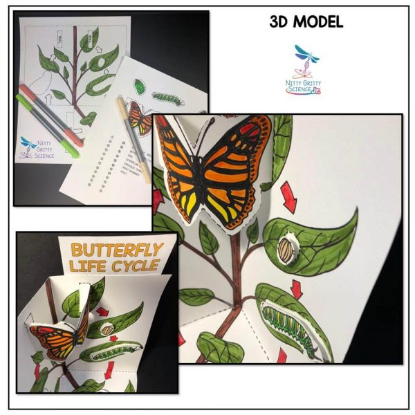 Butterfly Life Cycle Preview 2 600x600 - Butterfly Life Cycle Model - 3D Model