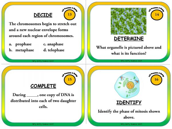 Cell Processes and Energy Page 06 600x450 - Cell Processes and Energy - Life Science Task Cards