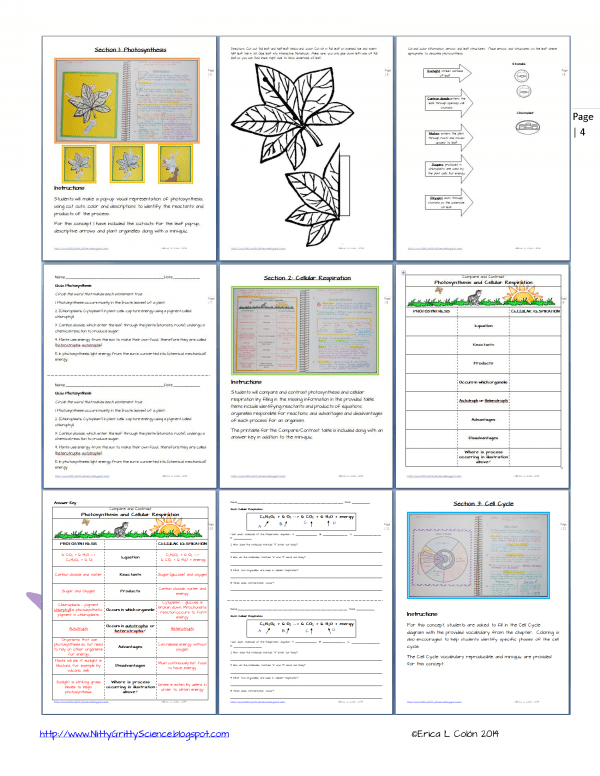DEMO CELL PROCESSES ENERGY Page 4 600x776 - Cell Processes & Energy