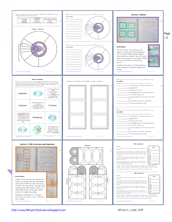 DEMO CELL PROCESSES ENERGY Page 5 600x776 - Cell Processes & Energy
