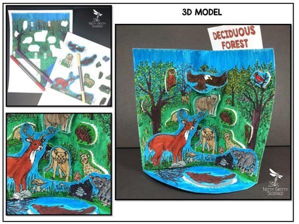 Deciduous Preview 1 600x450 - Deciduous Forest Biome Model - 3D Model - Biome Project