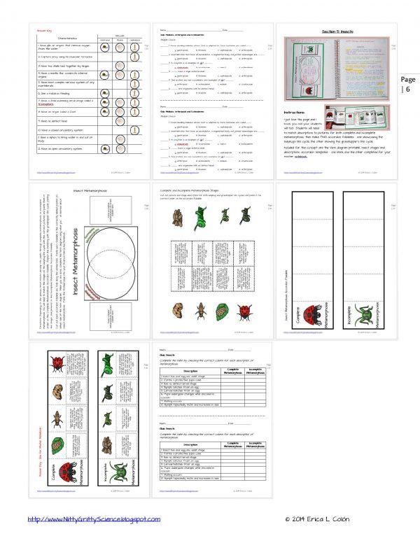 Demo ANIMAL DIVERSITY Invertebrates Page 6 600x776 - Animal Diversity – Invertebrates