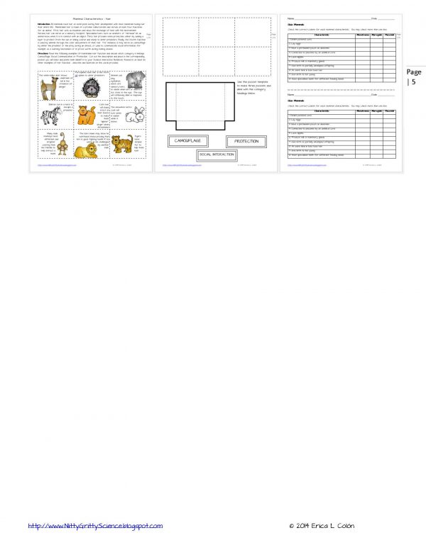 Demo ANIMAL DIVERSITY VERTEBRATES Page 5 600x776 - Animal Diversity – Vertebrates