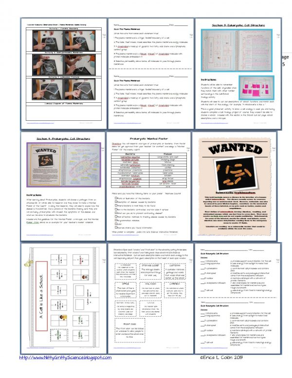 Demo Cell Structure and Function Page 5 600x776 - Cell Structure and Function