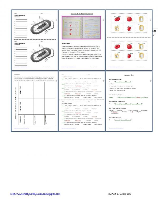Demo Cell Structure and Function Page 6 600x776 - Cell Structure and Function