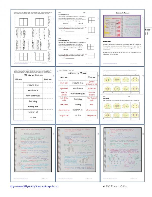 Demo GENETICS The Science of Heredity Page 5 600x776 - Genetics: The Science of Heredity