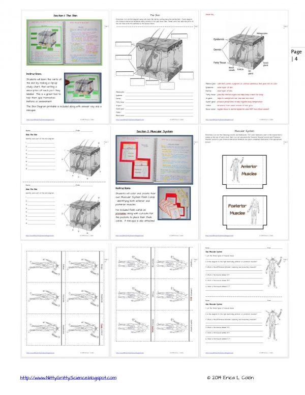 Demo HUMAN BODY Part 1 Page 4 600x776 - Human Body – Part 1
