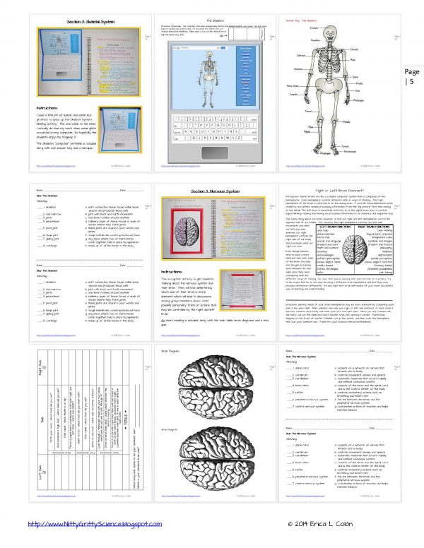 Demo HUMAN BODY Part 1 Page 5 600x776 - Human Body – Part 1