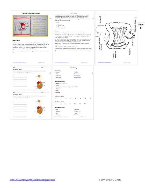 Demo HUMAN BODY Part 1 Page 6 600x776 - Human Body – Part 1