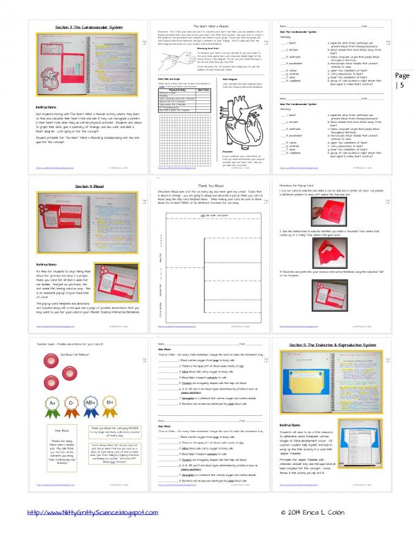 Demo HUMAN BODY Part 2 Page 5 600x776 - Human Body – Part 2