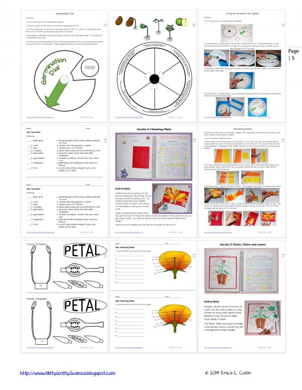 Demo PLANTS Page 5 1 600x776 - Life Science Interactive Notebook - The Complete Bundle for an Entire Year