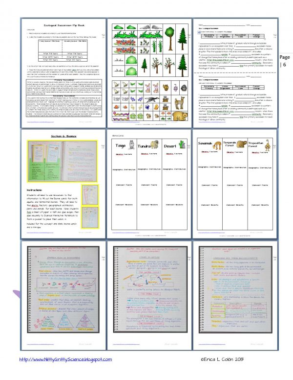 Demo PRINCIPLES OF ECOLOGY Page 6 600x776 - Principles of Ecology