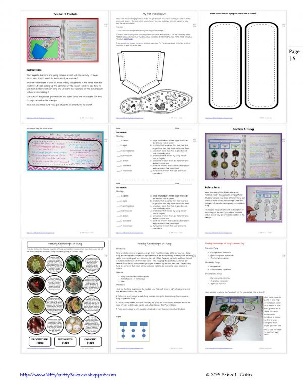 Demo THE MICROBIAL WORLD Page 5 600x776 - The Microbial World