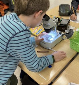 IMG 8507 278x300 - Using Microscopes (or Budget-Friendly Alternatives) to Teach Science in Elementary Classrooms