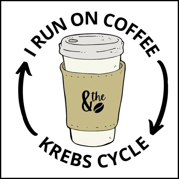 Krebs Cycle 600x600 - I Run on the Krebs Cycle
