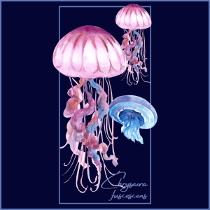 Octopus and Jellyfish 1 300x300 - Shop