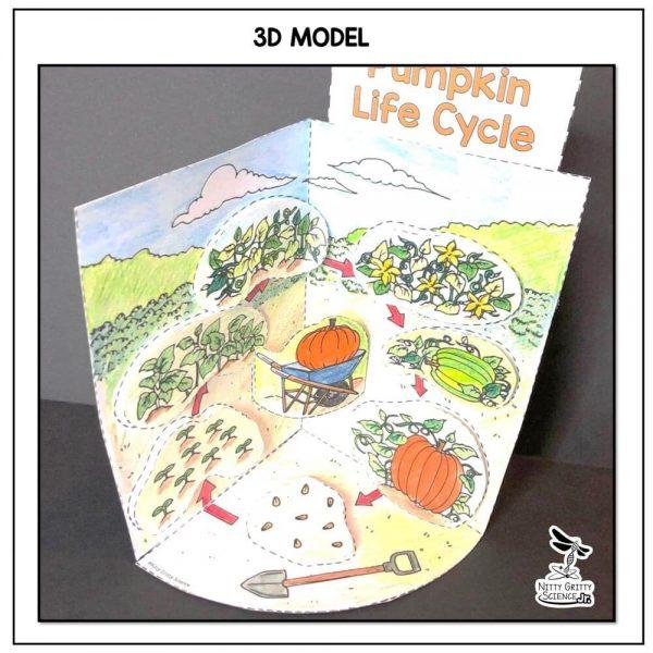 Pumpkin Life Cycle Preview 1 600x600 - Pumpkin Life Cycle Model - 3D Model - October Science