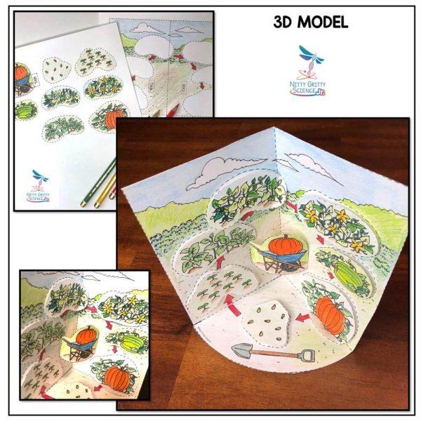 Pumpkin Life Cycle Preview 2 600x600 - Pumpkin Life Cycle Model - 3D Model - October Science
