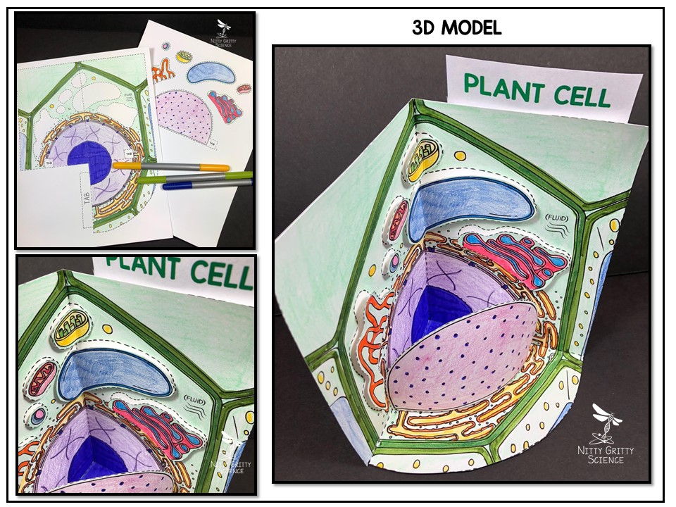 Plant Cell - 3D Model | Nitty Gritty Science