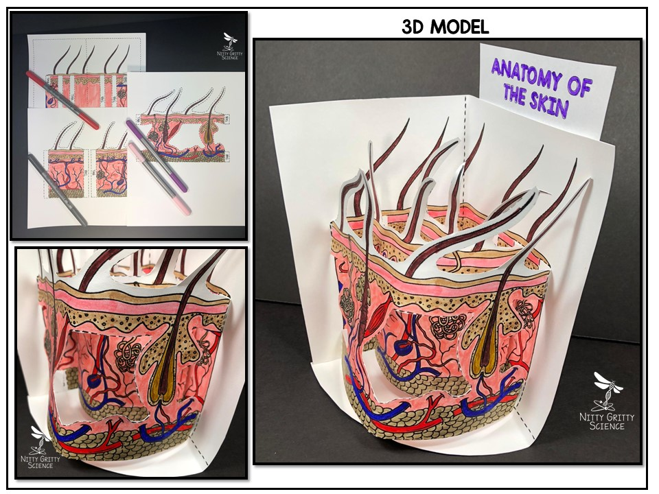 Slide1 8 - Make Amazing 3D Models in a Class Period!
