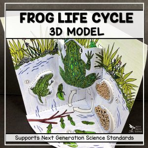 Slide14 1 300x300 - Frog Life Cycle Model - 3D Model