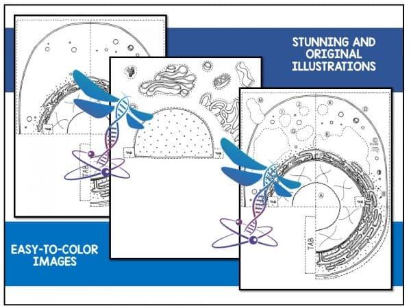 Slide2 6 600x450 - Animal Cell - 3D Model