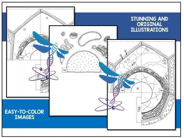 Slide2 7 600x450 - Plant Cell - 3D Model