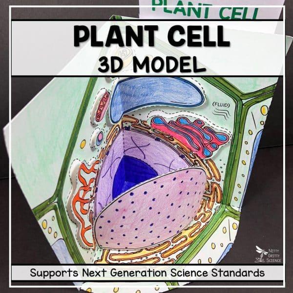 Slide21 600x600 - Plant Cell - 3D Model