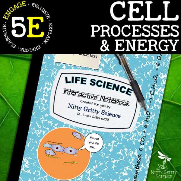 Slide8 1 600x600 - Cell Processes & Energy