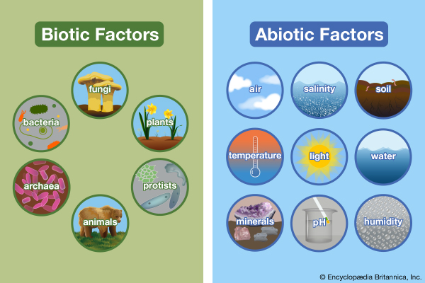 abioticbiotic - Section 4: Organisms & their Environment