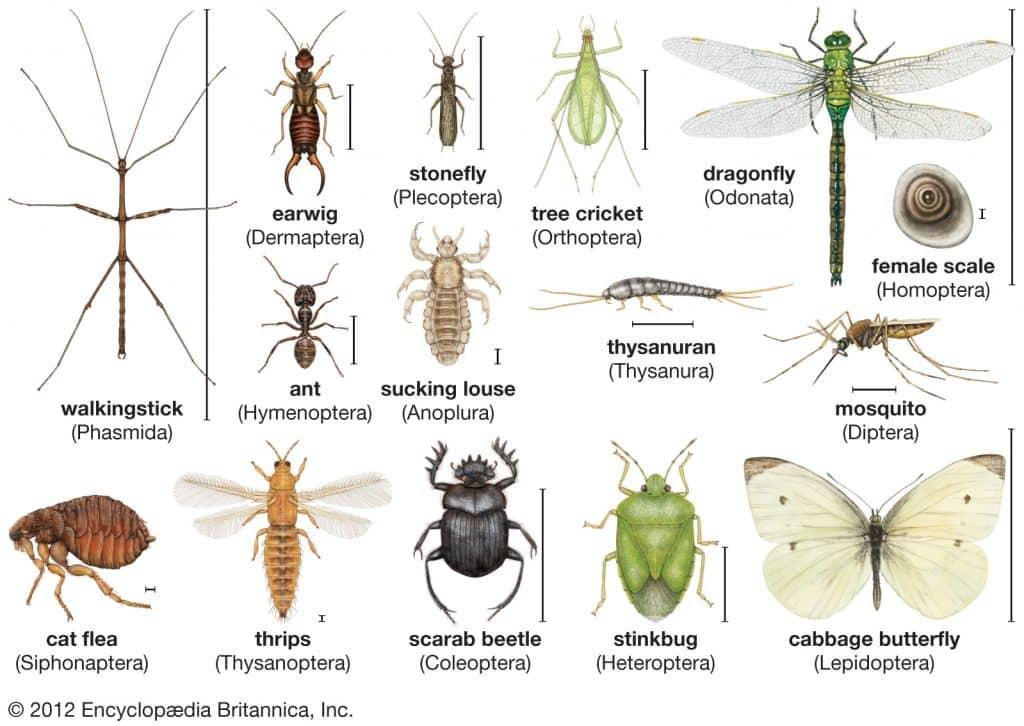 arthropods 1024x726 - Section 4: Mollusks, Arthropods, & Echinoderms