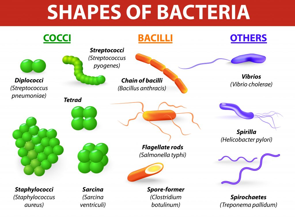 bacteria tip 1024x756 - Section 1: Bacteria