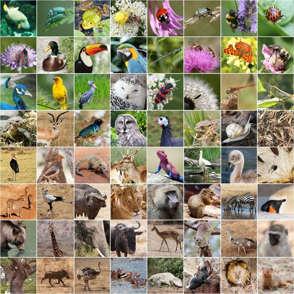 biodviersity 1024x1024 - Section 4: Biodiversity