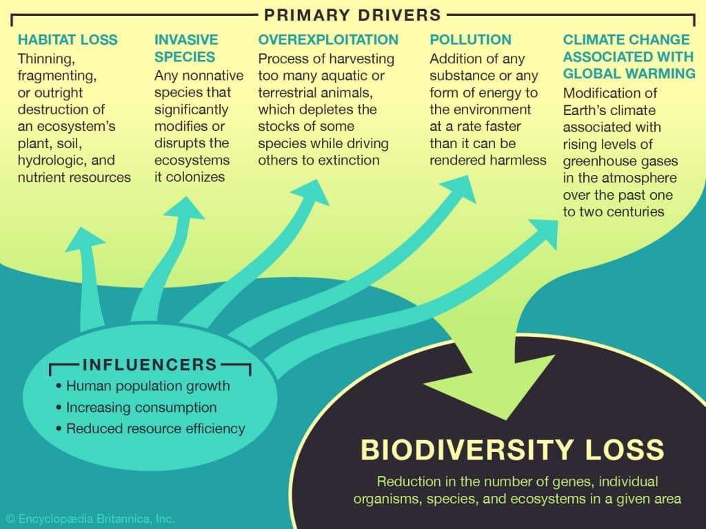 biodviersityloss 1024x768 - Section 4: Biodiversity