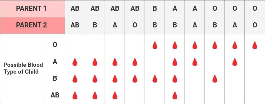 blood types - Section 1: Complex Patterns of Inheritance