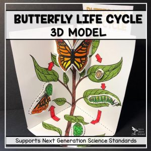 butterfly life cycle model 3d model featured image 300x300 - Butterfly Life Cycle Model - 3D Model