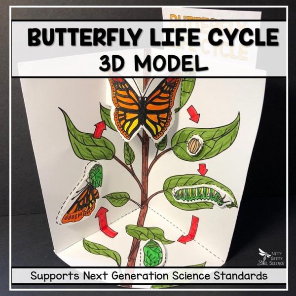 butterfly life cycle model 3d model featured image 600x600 - Butterfly Life Cycle Model - 3D Model
