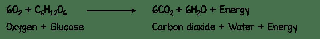 cellrespequation 1024x126 - Section 2: Cellular Respiration