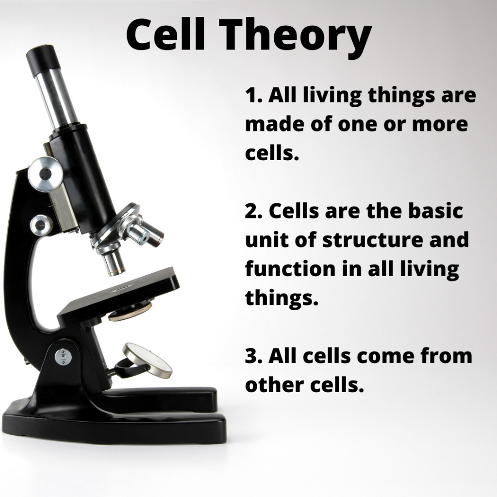 celltheory 1024x1024 - Section 1: The Discovery of Cells