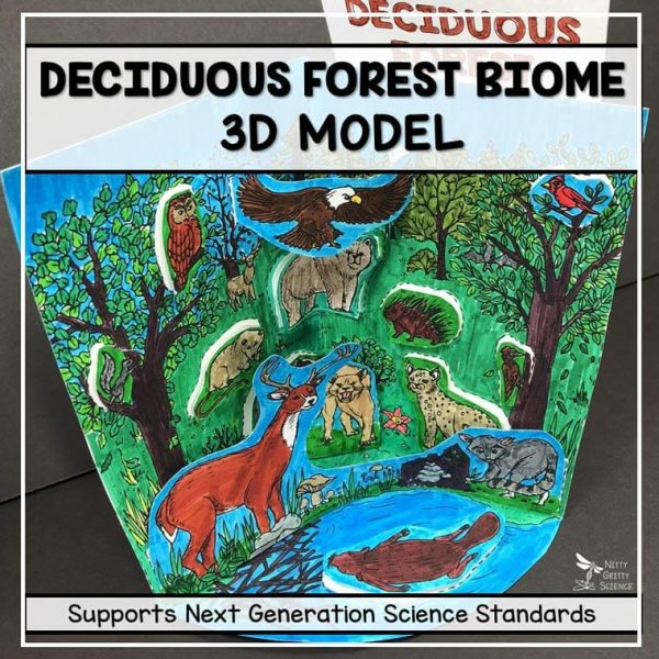 deciduous forest biome model 3d model biome project featured image 600x600 - Deciduous Forest Biome Model - 3D Model - Biome Project
