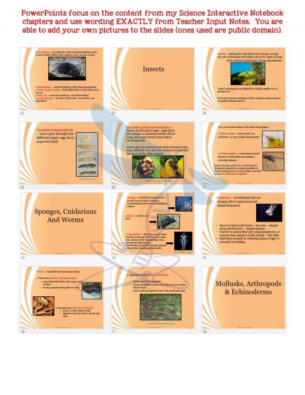 demoLifeScienceNotesPowerPointTestAnimalDiversityInvertebratesEDITABLE2398246 Page 5 600x776 - Animal Diversity: Invertebrates Life Science Notes, PowerPoint & Test~ EDITABLE