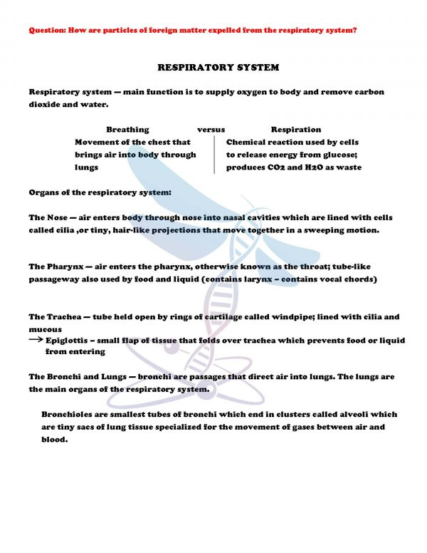 demoLifeScienceNotesPowerPointTestHumanBodyPart2EDITABLE2399168 Page 4 600x776 - Human Body - Part 2: Life Science Notes, PowerPoint & Test ~ EDITABLE