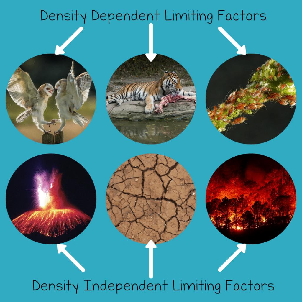 densitylimiting 1024x1024 - Section 1: Characteristics of Populations